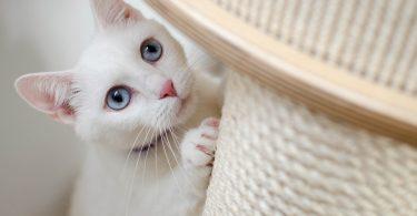 cat scratching the scratch post