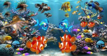 fish fungus in fish tank