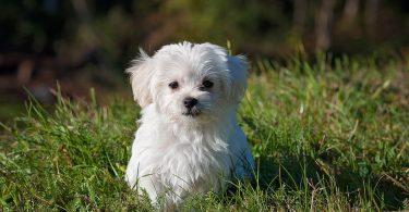 cute white puppy in the garden
