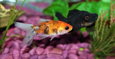 white spots in fish