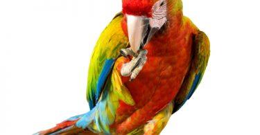 psittacosis in birds