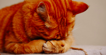 upper respiratory infection in kittens