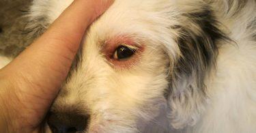 distemper in dogs
