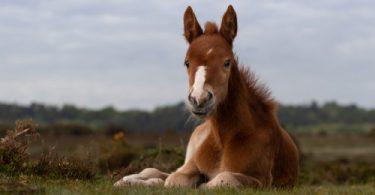 horse dry skin