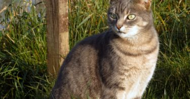cats with arthritis