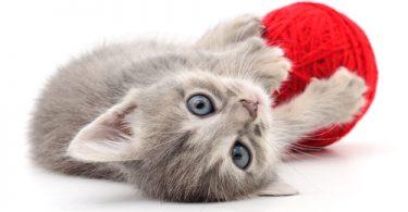 ringworms in kittens