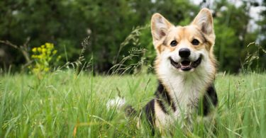 bowel incontinence in dogs