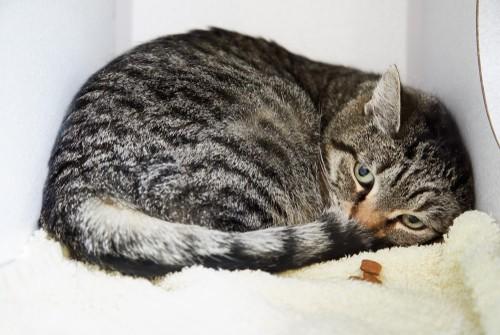 cat losing weight