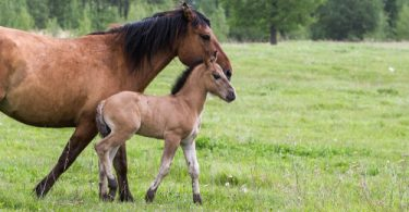 colic in horses