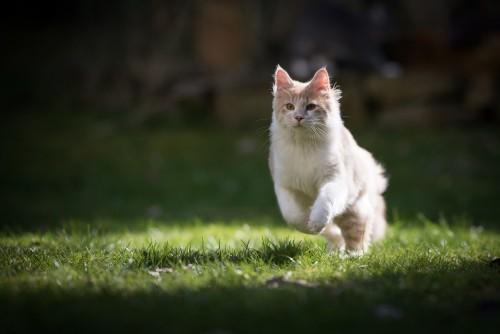 cat health problems