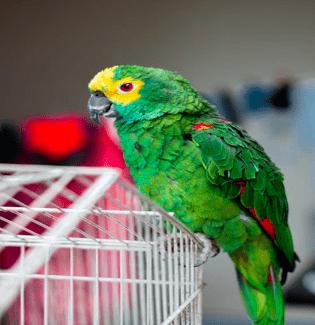 bird body language