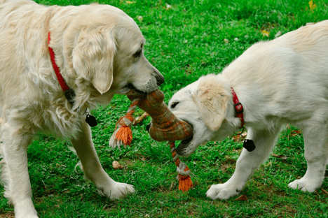 Behavior Problems in Puppies