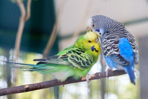 behavior problems in birds