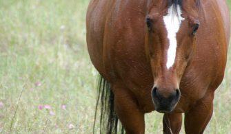 Senior Horse Health Problems