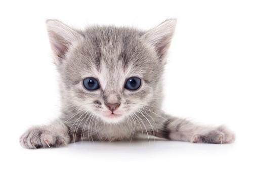 Behavior Problems in Kittens