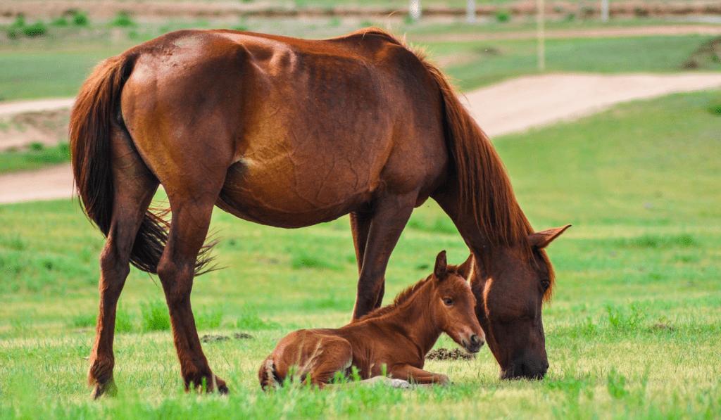 common behavior problems in horses