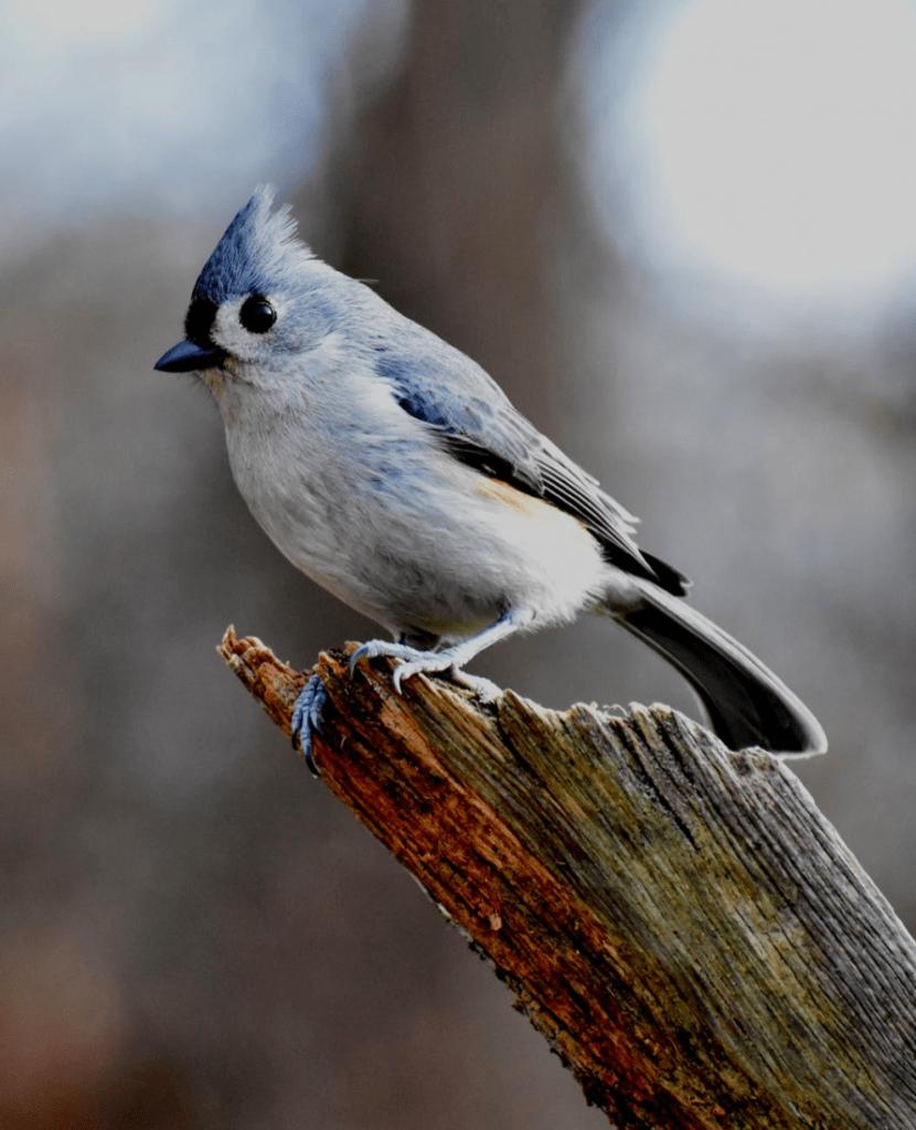 bird health problems