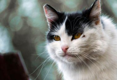senior cat health problems