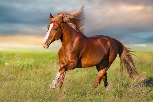 behavior problems in horses